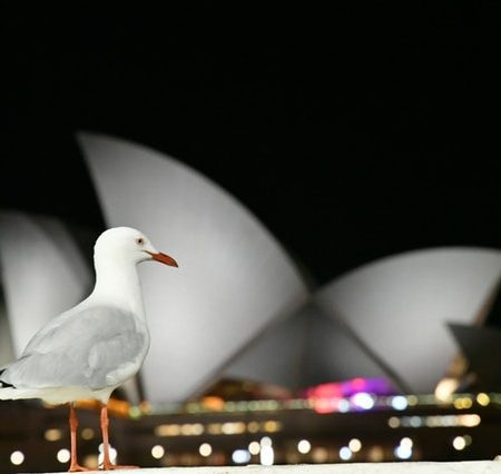 do Americans understand Australian English