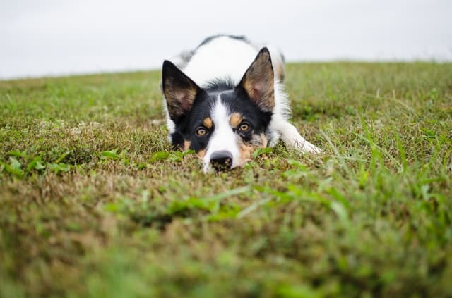 English expression startle listener- dog in field